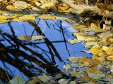 Autumn Leaves Float in a Pool of Water