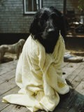 A Dog That Has Just Had a Bath - Bill Curtsinger