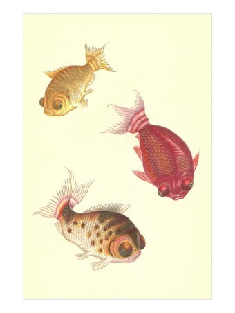 Carpes japonaises posters affiches d 39 art for Acheter des carpes