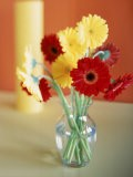 Red and Yellow Gerbera Daisies - Casey McNamara