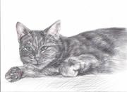 dessin animaux animaux chat : chat2