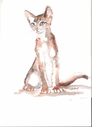 dessin animaux aquarelle chat bebe assis : chaton 01