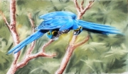 dessin animaux ara oiseaux pastel : On discute ?