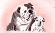 dessin animaux bouledogue bulldog chiens amour : Chiens