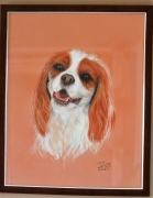 dessin animaux cavalier king charle portrait de chien : Cavalier King Charles