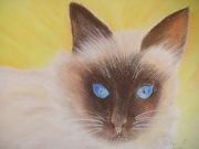 dessin animaux chat cat gatto : pastel chat
