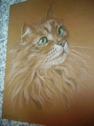 dessin animaux chat poil tendresse : chat persan VENDU