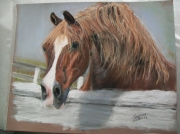dessin animaux cheval arabe pastel horse : Pur sang arabe