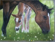 dessin animaux cheval jument poulain horse : Mother and Foal