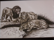 dessin animaux felins assoiffees : Point d'eau
