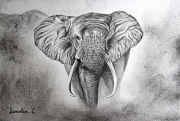 Dessin animaux galerie creation - Dessin elephant rigolo ...