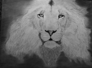dessin animaux lion felin jungle nature : Lion