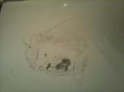 lion rugissant dessin