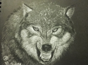 dessin animaux loup noir yeux sauvage : Loup