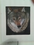 dessin animaux loup sauvage wolf nature : Loup