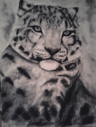 dessin animaux once once pastel dessin pastel dessin fauve : Once