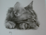 dessin animaux portrait chat : Chat dormant
