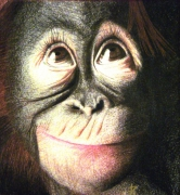 dessin animaux singe souriant reproduction : Singe souriant