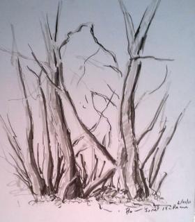 pin dessin nature arbre d heqoeu fro on pinterest. Black Bedroom Furniture Sets. Home Design Ideas