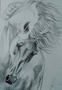 dessin cheval stylo mouvement animal : cheval
