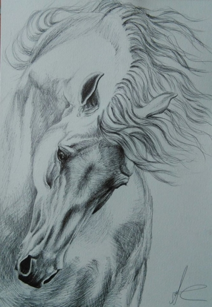 DESSIN cheval stylo mouvement animal  - cheval