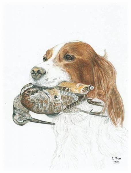 Dessin chien chasse bcasse epagneul epagneul - Dessin de chasse ...
