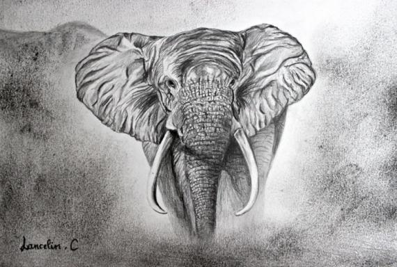Dessin fusain l phant crayon dessin el phant - Elephant en dessin ...