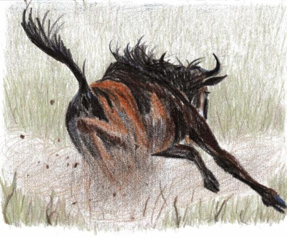 Dessin gnou savane galop sauvage gnou - Dessins d animaux sauvages ...