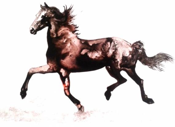 dessin cheval encre de chine