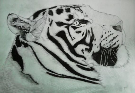 Dessin portrait tigre tigre blanc dessin animalier dessin - Dessin animaux noir et blanc ...
