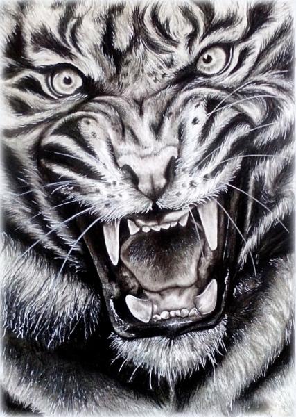dessin tigre flin lion dessin tigre dessin tigre rugissant raliste noir et blanc. Black Bedroom Furniture Sets. Home Design Ideas