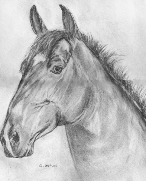 Dessin var st rapha l cheval t te de cheval t te de cheval - Dessins de chevaux facile ...