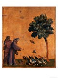 St. Francis of Assisi Preaching to the Birds - Giotto di Bondone