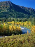Mts and Trees in Autumn, Denali National Park, AK - Hal Gage