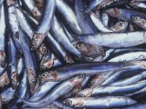 Sardines on a Market Stall in Aix-en-Provence, France - Hans-peter Siffert