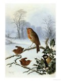 Christmas Robin and Friends - Harry Bright