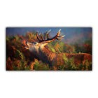 Cerf Tableau Poster Décoration Photo Nature Animal Chasseur Gibier ARIMAJE