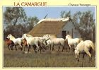 France La Camargue Chevaux Sauvages Running Horses Pferde