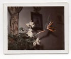 PHOTO COULEUR Polaroïd - Bouquet de Fleurs Plantes Vase Salon - Vers 1960
