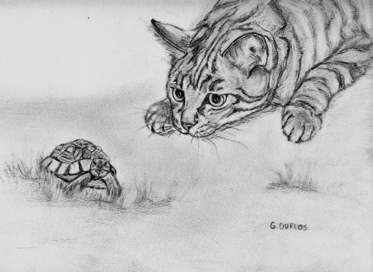 Dessin var st rapha l chat la tortue animaux crayon la - Dessin du lievre et de la tortue ...
