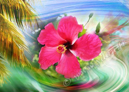Bevorzugt Art numérique HIBISCUS ANTILLES FLEUR MARTINIQUE Fleurs  ZM92