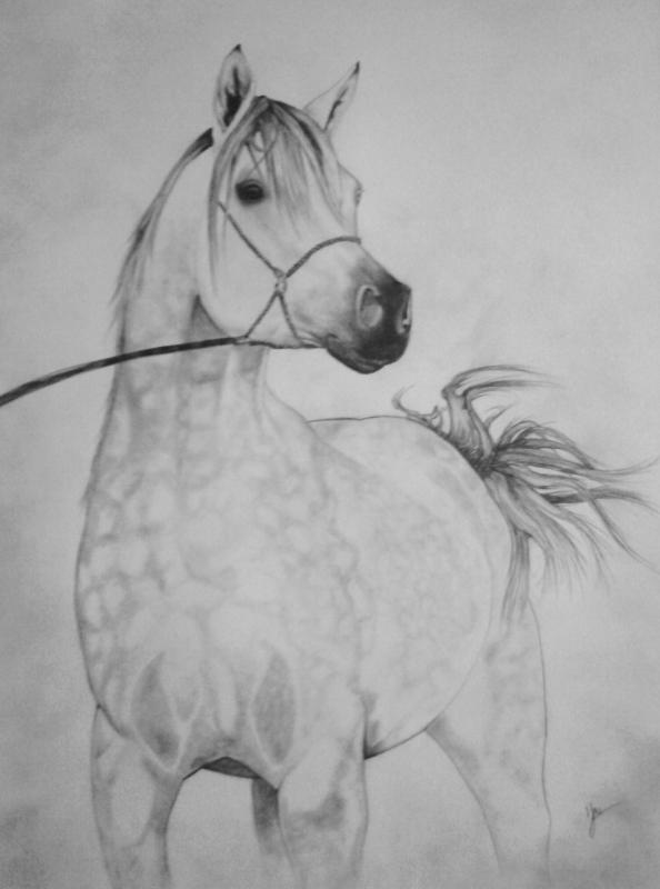Dessin chevaux portrait dessin cheval chevaux animaux crayon pur sang arabe - Dessins de chevaux facile ...