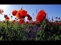 RELAXATION & NATURE - Oiseaux Champs Fleurs Ruisseau â™' Sommeil Profond, Déstressant 🎧 100% RELAX