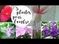 5 plantes pour des fleurs à l'ombre ou en mi-ombre
