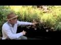 Comment aménager un balcon pour cacher le vis-à-vis ?  - Jardinerie Truffaut TV