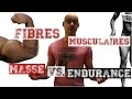 Les types de fibres: comment développer sa masse, sa force, son endurance