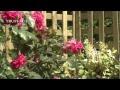 Comment aménager un petit balcon ? - Jardinerie Truffaut TV