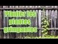 Comment planter et entretenir des plantes grimpantes pour balcon ?