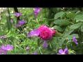 Le jardin André Eve- Jardineries Truffaut TV