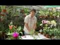 11 - Astuce jardinage : comment donner une nouvelle jeunesse aux lucky bambous ?